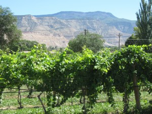 plum creek vines